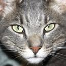 Dakin, animal rescue. animal adoption, no kill shelter